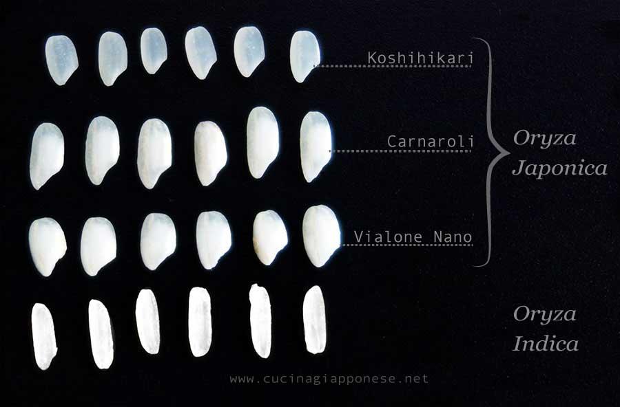 tipologie di riso a confronto