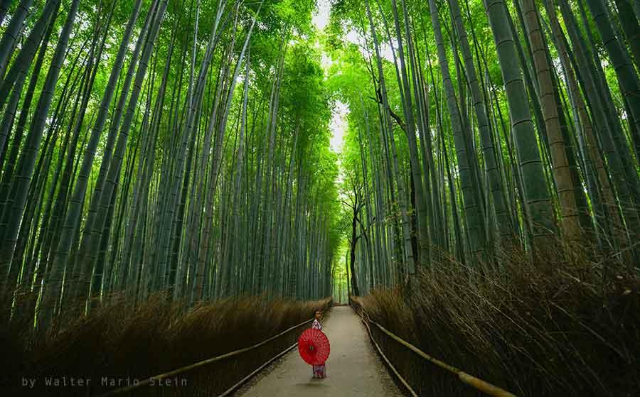 bosco di bambu